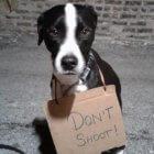 don't shoot