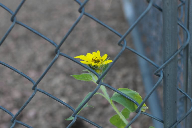 prison flower